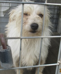 Dog Impoundment Notice