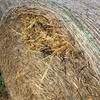 Weeds in fodder