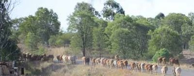 Roadside grazing and stock routes