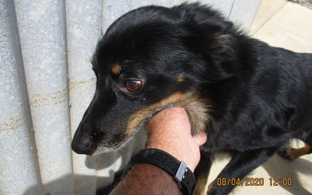 Dog Impoundment Notice – PER08042001