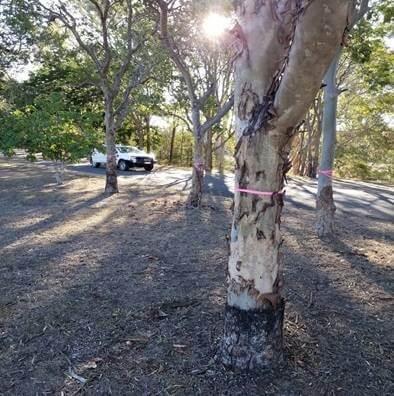 Zonhoven Park, Gayndah – Removal of Trees